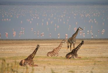 THE BEST NOTHERN TANZANIA GAME SAFARIS PARKS