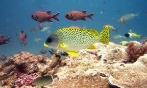 Zanzibar Padi Scuba Diving